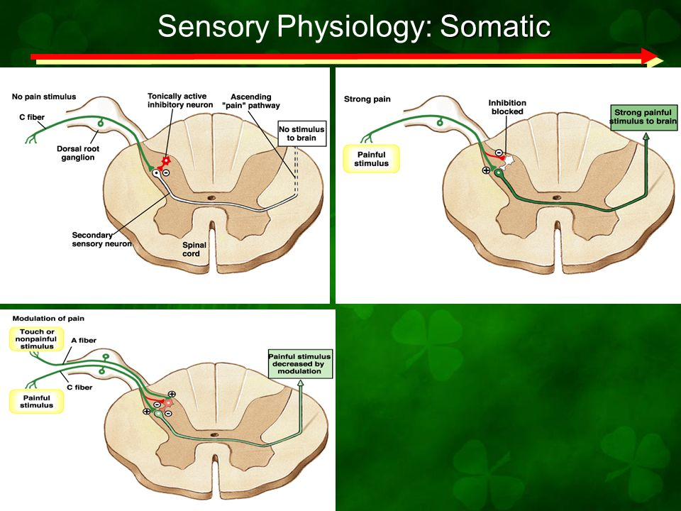 Sensory Physiology: Somatic