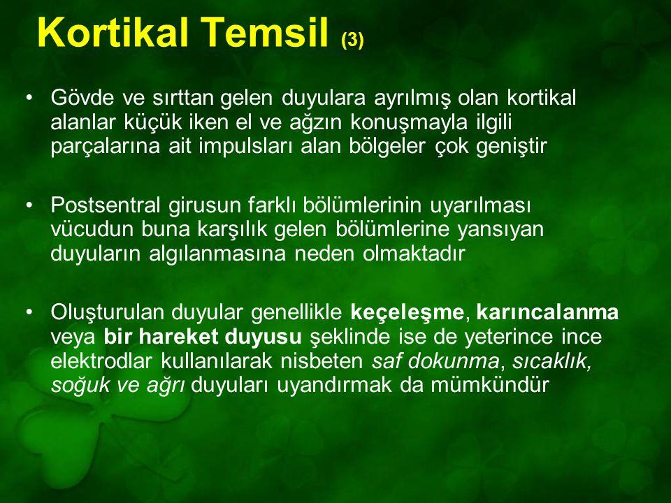 Kortikal Temsil (3)