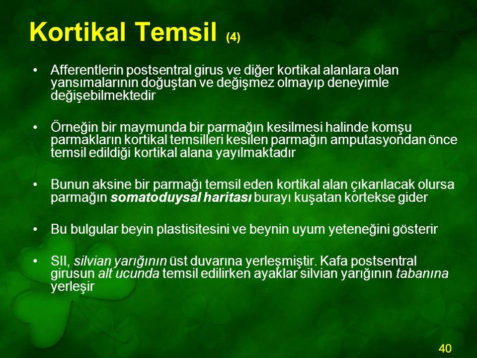 Kortikal Temsil (4)