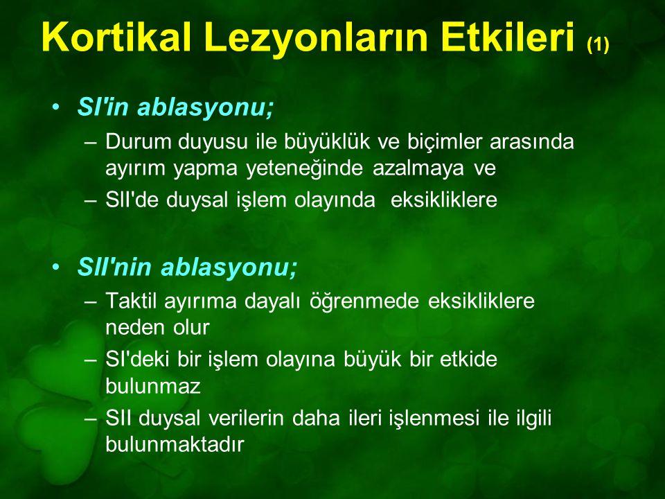 Kortikal Lezyonların Etkileri (1)