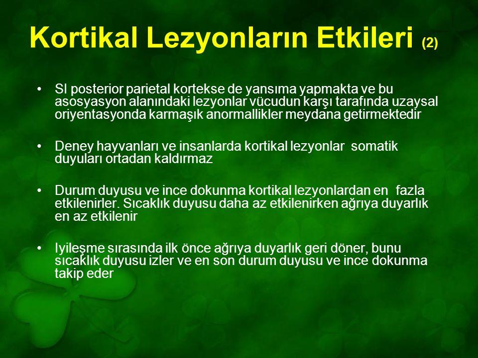 Kortikal Lezyonların Etkileri (2)