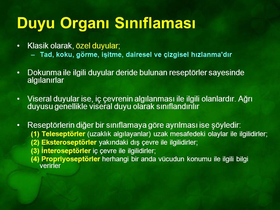 Duyu Organı Sınıflaması
