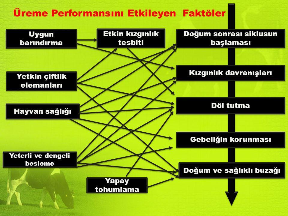 Üreme Performansını Etkileyen Faktöler