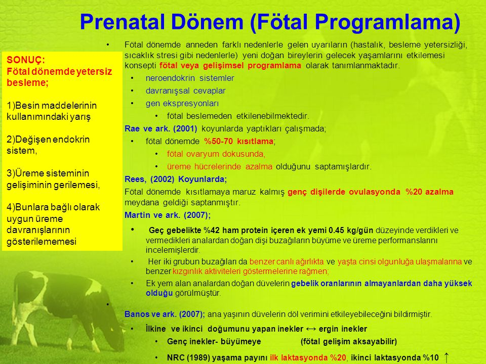 Prenatal Dönem (Fötal Programlama)