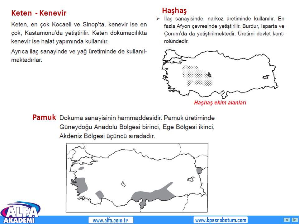 Haşhaş Keten - Kenevir Pamuk www.alfa.com.tr www.kpssrobotum.com