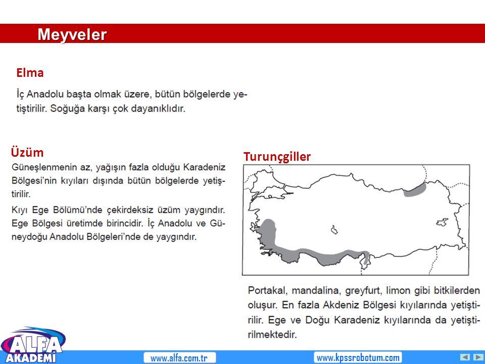 Meyveler Elma Üzüm Turunçgiller www.alfa.com.tr www.kpssrobotum.com