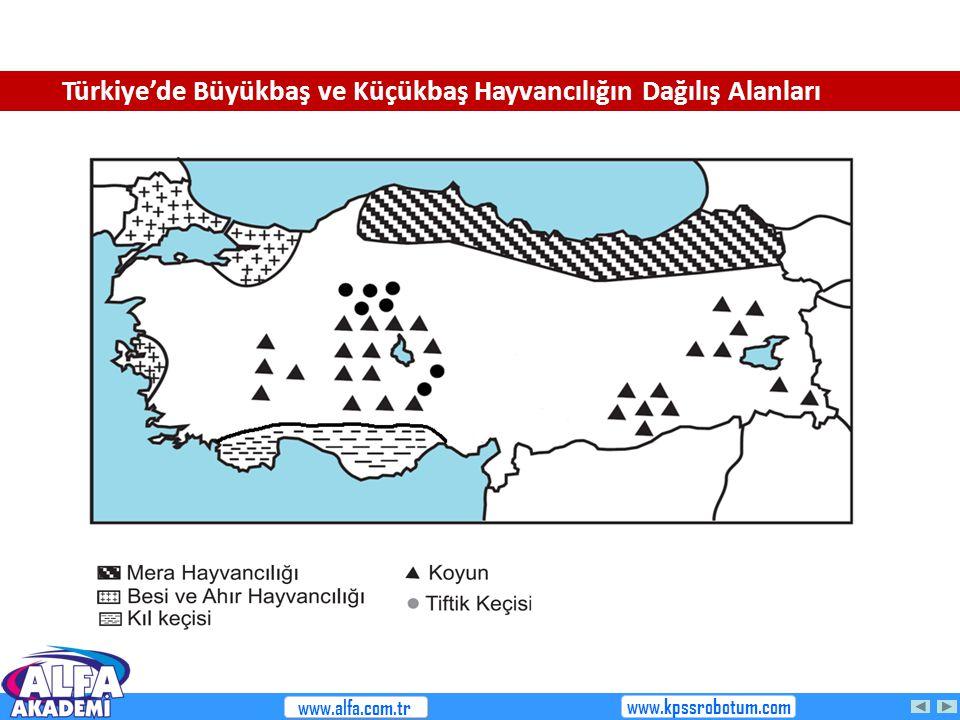 Türkiye'de Büyükbaş ve Küçükbaş Hayvancılığın Dağılış Alanları