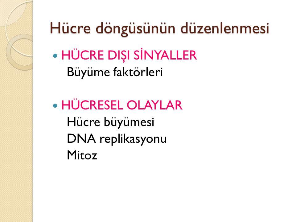 Hücre döngüsünün düzenlenmesi
