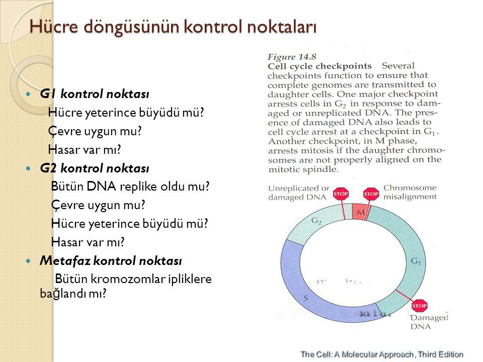 Hücre döngüsünün kontrol noktaları