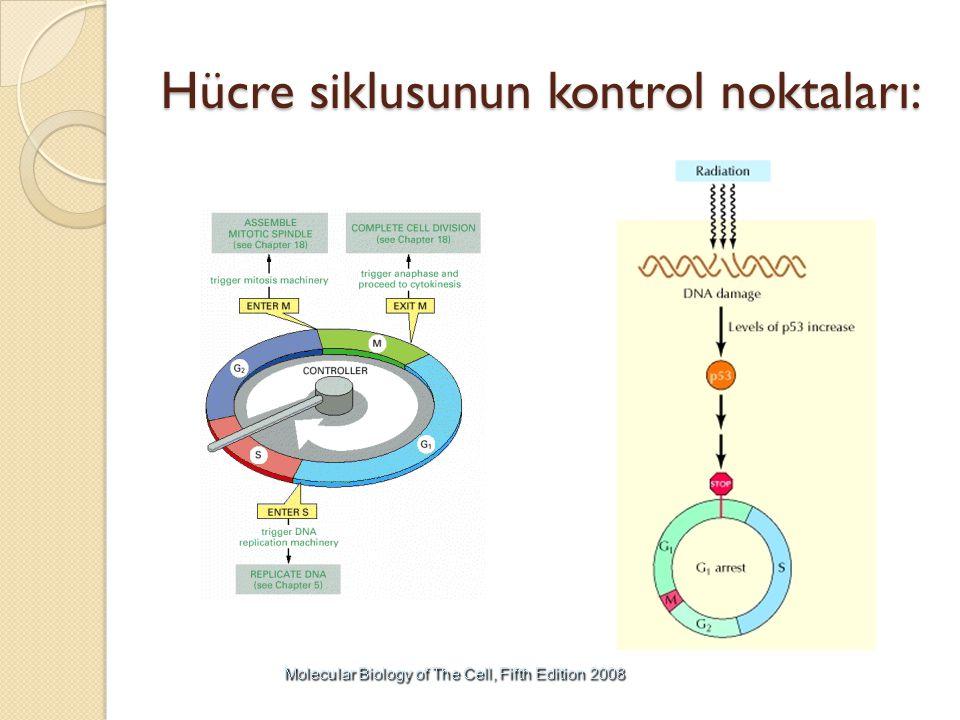 Hücre siklusunun kontrol noktaları: