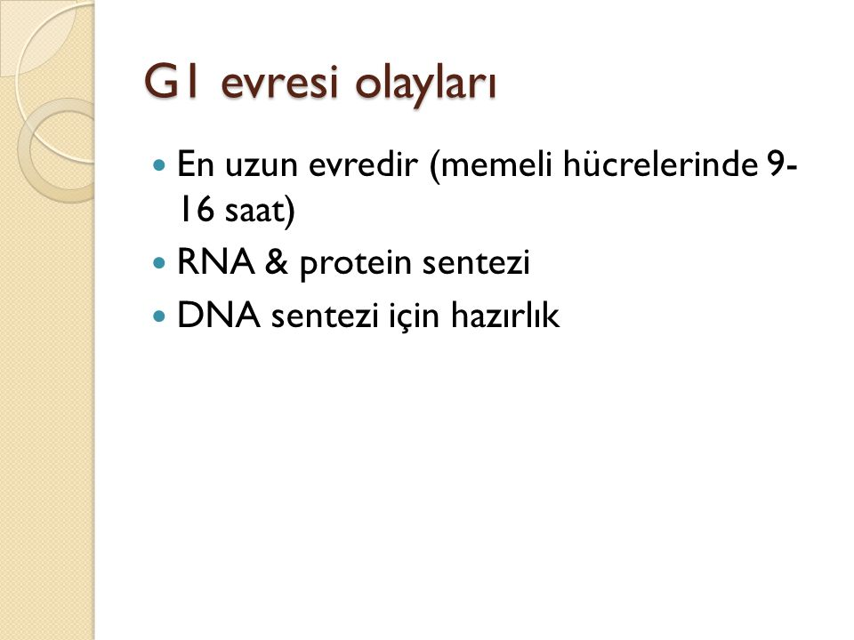 G1 evresi olayları En uzun evredir (memeli hücrelerinde 9- 16 saat)
