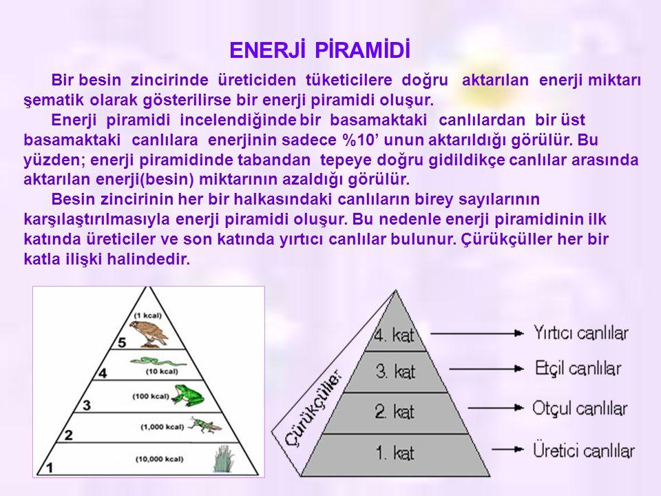 ENERJİ PİRAMİDİ