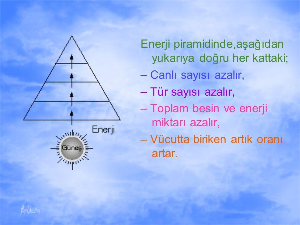 Enerji piramidinde,aşağıdan yukarıya doğru her kattaki;