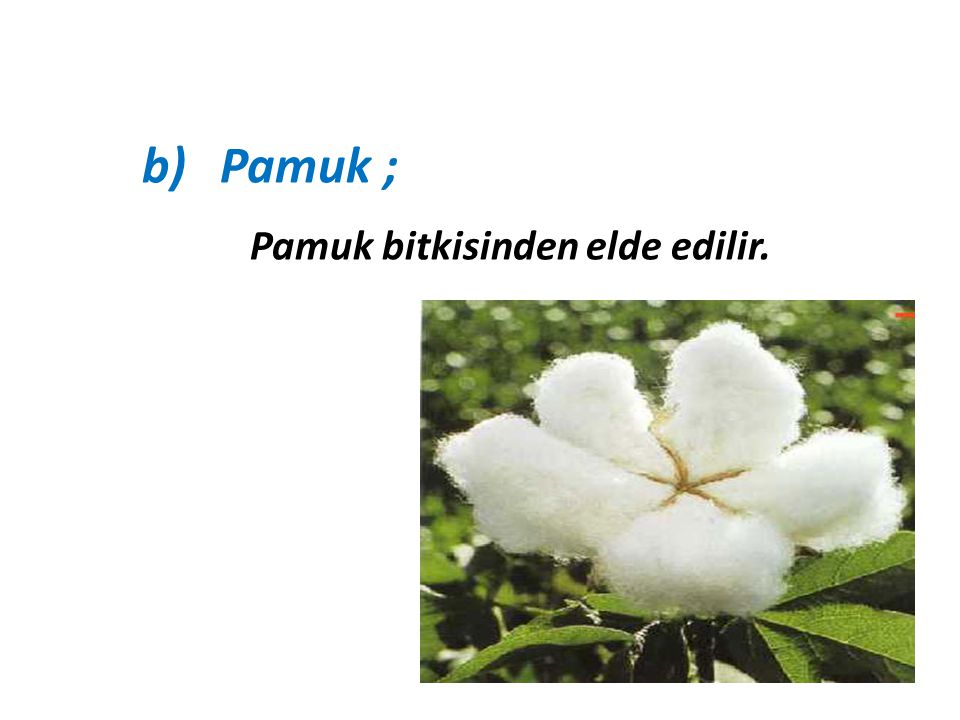 Pamuk ; Pamuk bitkisinden elde edilir.