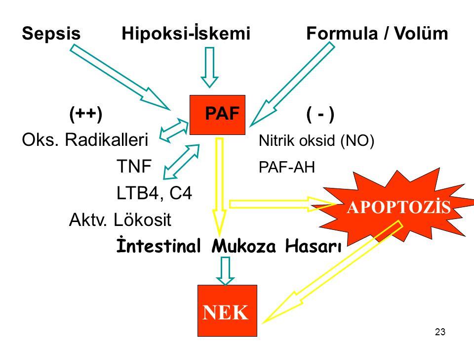 NEK Sepsis Hipoksi-İskemi Formula / Volüm (++) PAF ( - )