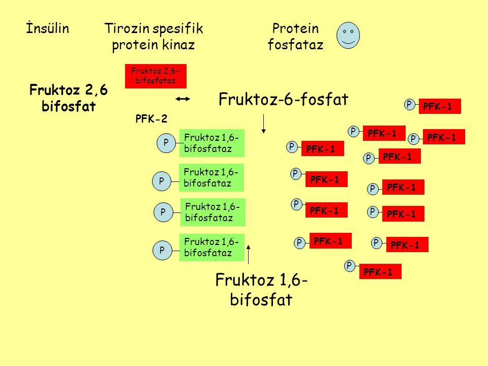 Tirozin spesifik protein kinaz