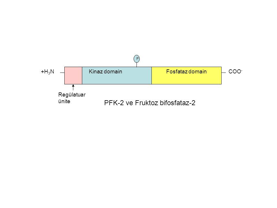 PFK-2 ve Fruktoz bifosfataz-2