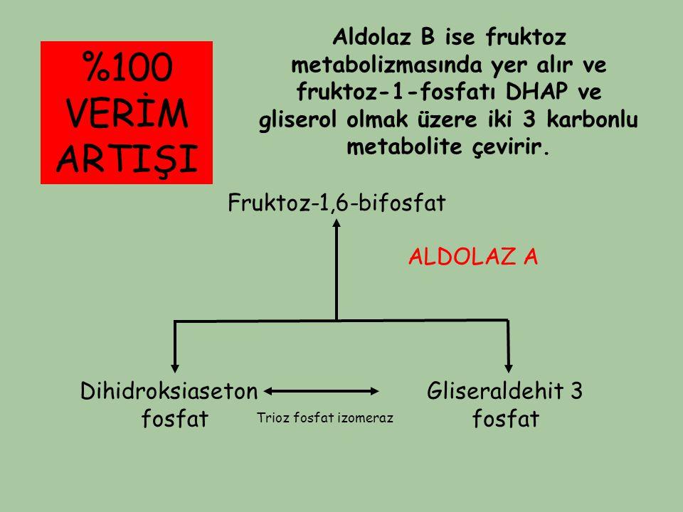 Aldolaz B ise fruktoz metabolizmasında yer alır ve fruktoz-1-fosfatı DHAP ve gliserol olmak üzere iki 3 karbonlu metabolite çevirir.