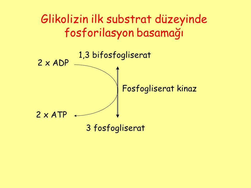 Glikolizin ilk substrat düzeyinde fosforilasyon basamağı