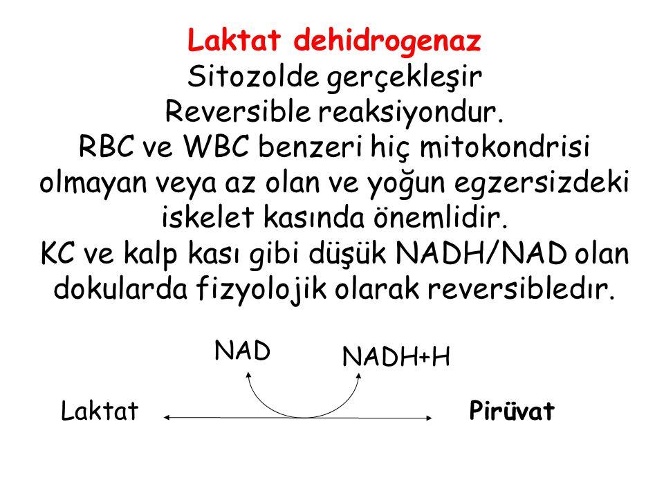Sitozolde gerçekleşir Reversible reaksiyondur.