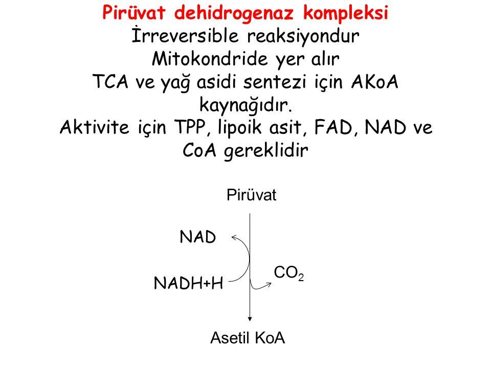 Pirüvat dehidrogenaz kompleksi