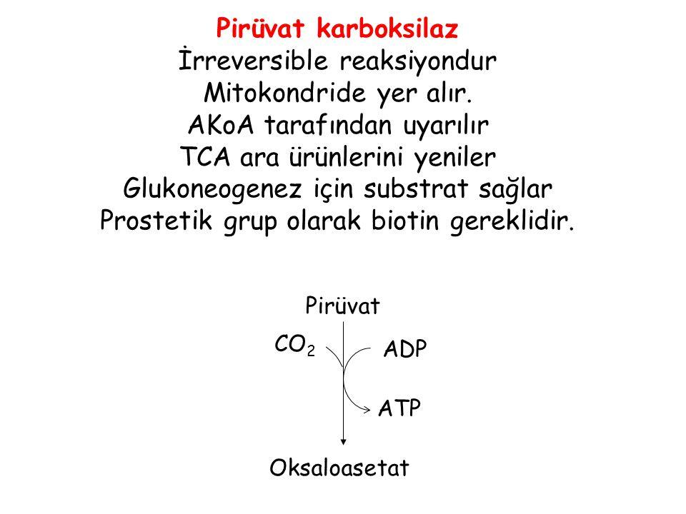 İrreversible reaksiyondur Mitokondride yer alır.