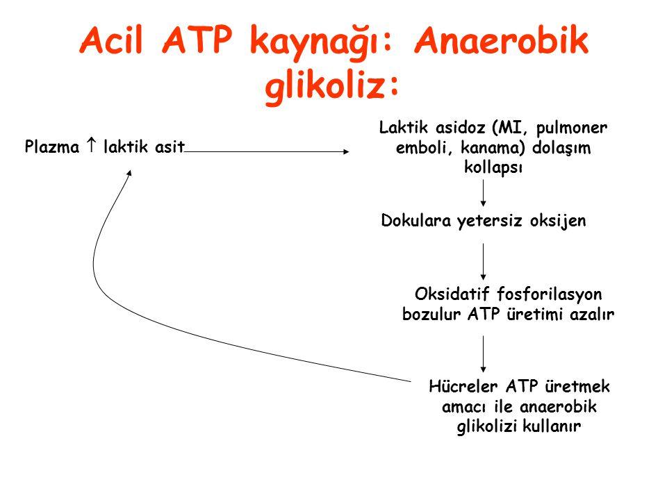 Acil ATP kaynağı: Anaerobik glikoliz: