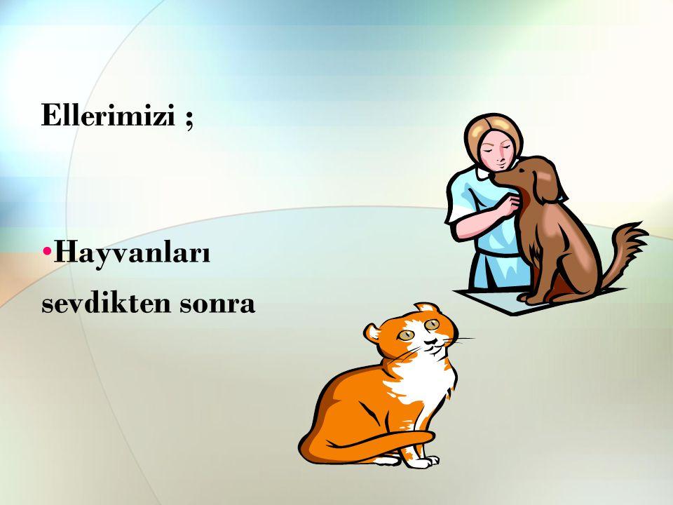 Ellerimizi ; Hayvanları sevdikten sonra