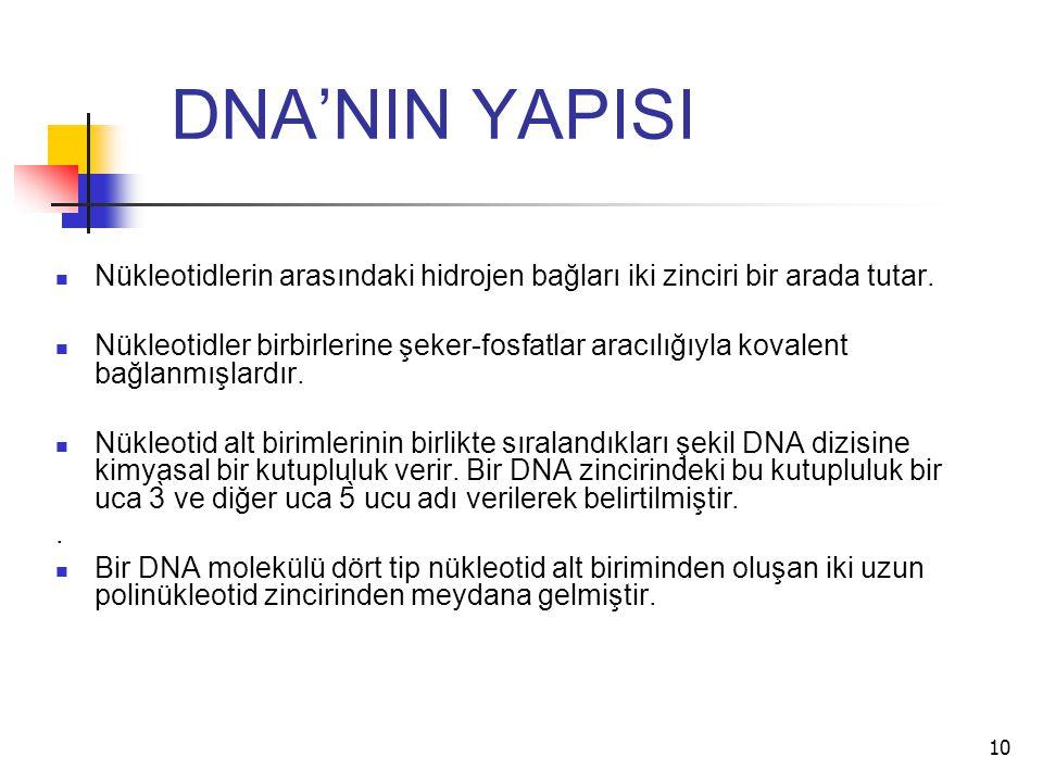 DNA'NIN YAPISI Nükleotidlerin arasındaki hidrojen bağları iki zinciri bir arada tutar.