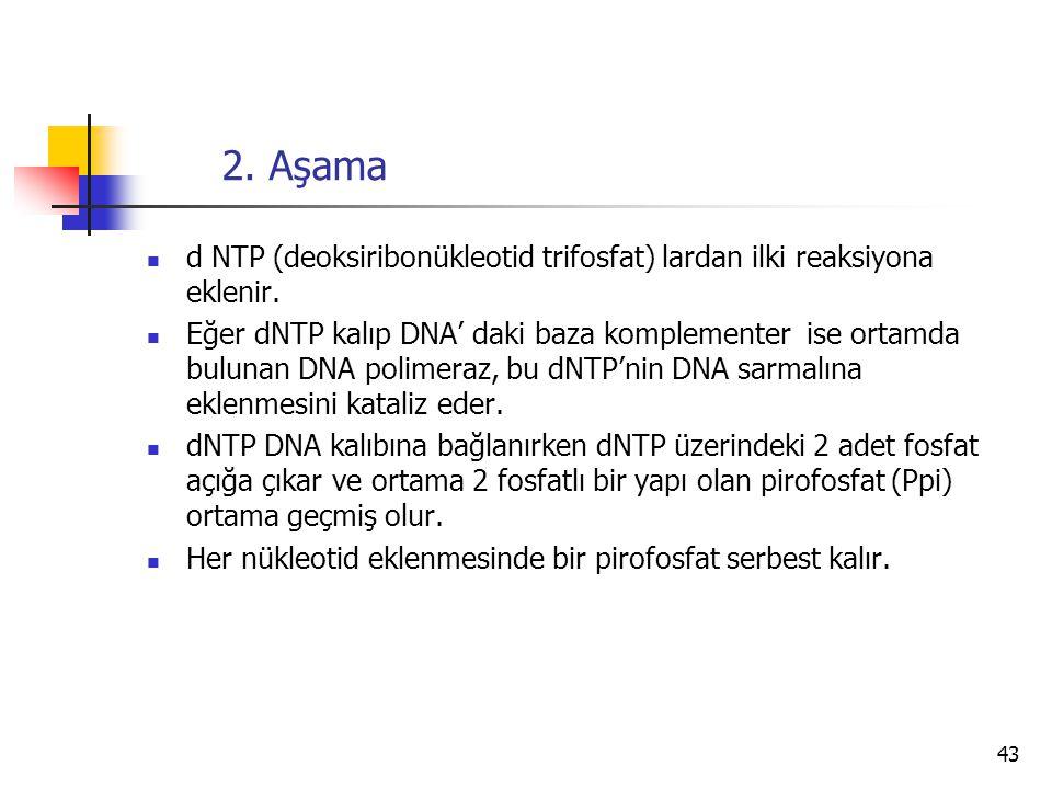 2. Aşama d NTP (deoksiribonükleotid trifosfat) lardan ilki reaksiyona eklenir.