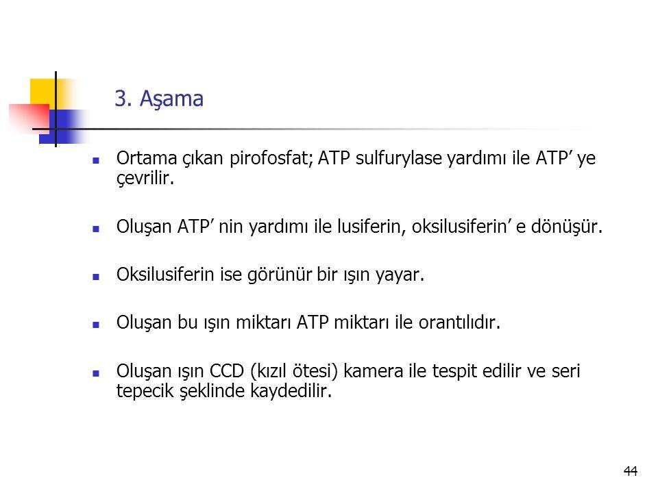 3. Aşama Ortama çıkan pirofosfat; ATP sulfurylase yardımı ile ATP' ye çevrilir. Oluşan ATP' nin yardımı ile lusiferin, oksilusiferin' e dönüşür.