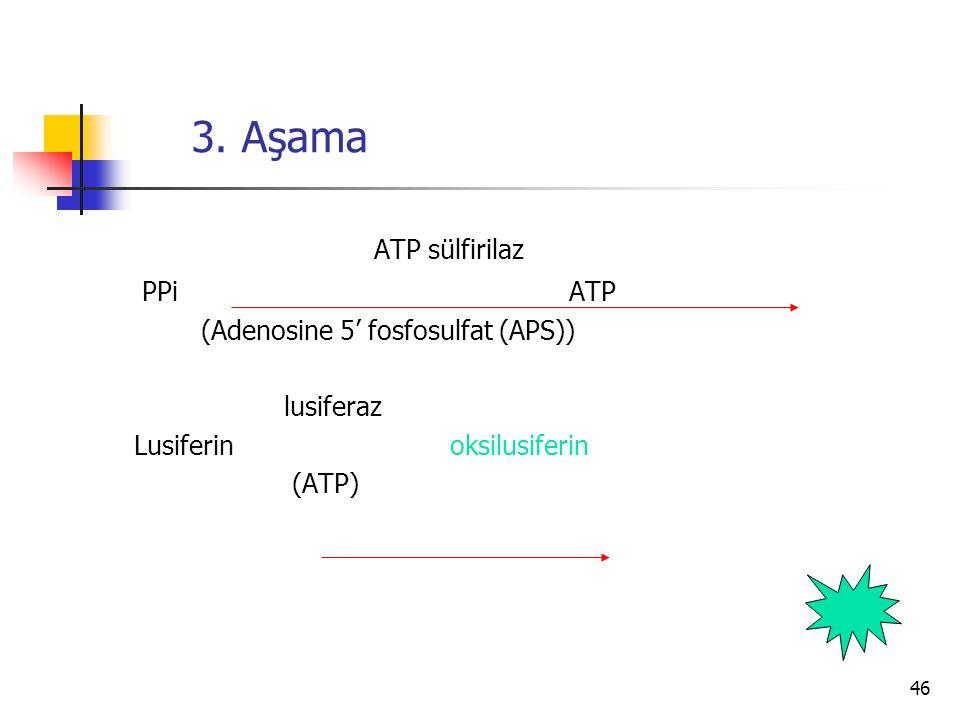 3. Aşama ATP sülfirilaz PPi ATP (Adenosine 5' fosfosulfat (APS))