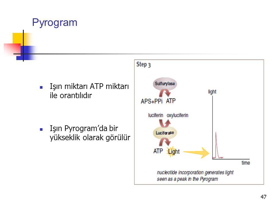 Pyrogram Işın miktarı ATP miktarı ile orantılıdır