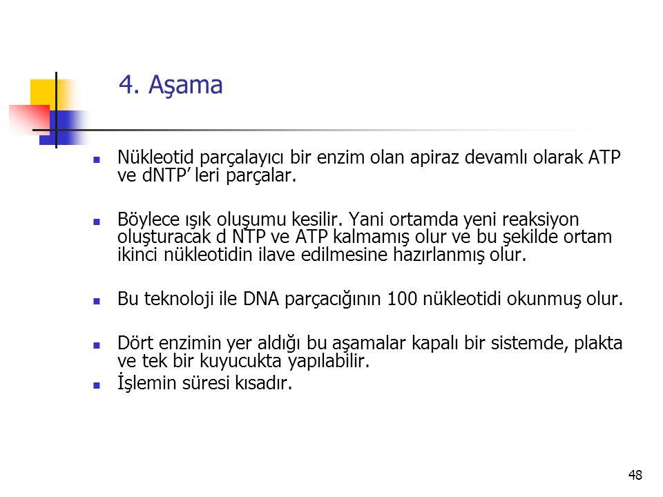 4. Aşama Nükleotid parçalayıcı bir enzim olan apiraz devamlı olarak ATP ve dNTP' leri parçalar.