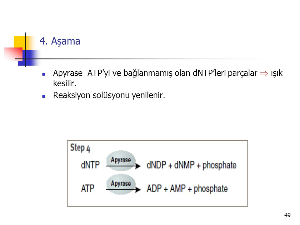 4. Aşama Apyrase ATP'yi ve bağlanmamış olan dNTP'leri parçalar  ışık kesilir.