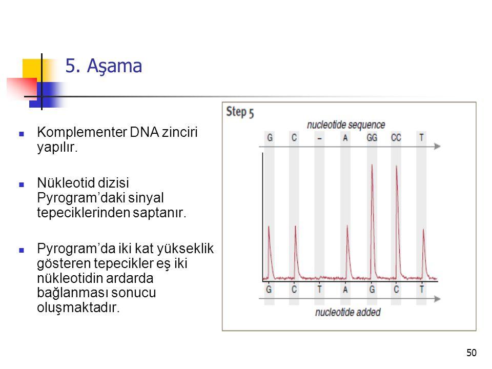 5. Aşama Komplementer DNA zinciri yapılır.