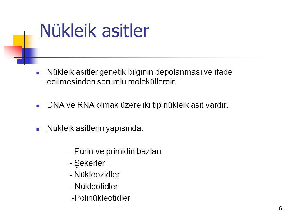 Nükleik asitler Nükleik asitler genetik bilginin depolanması ve ifade edilmesinden sorumlu moleküllerdir.