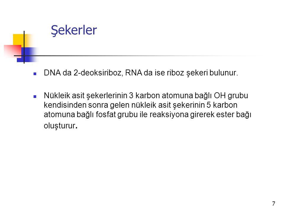 Şekerler DNA da 2-deoksiriboz, RNA da ise riboz şekeri bulunur.