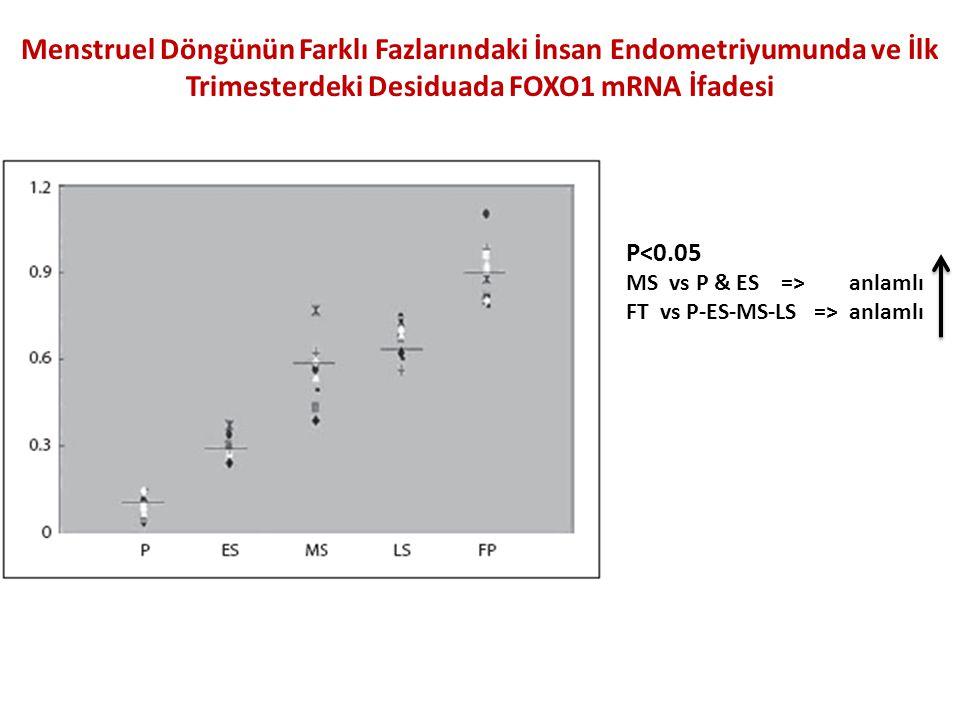 Menstruel Döngünün Farklı Fazlarındaki İnsan Endometriyumunda ve İlk Trimesterdeki Desiduada FOXO1 mRNA İfadesi