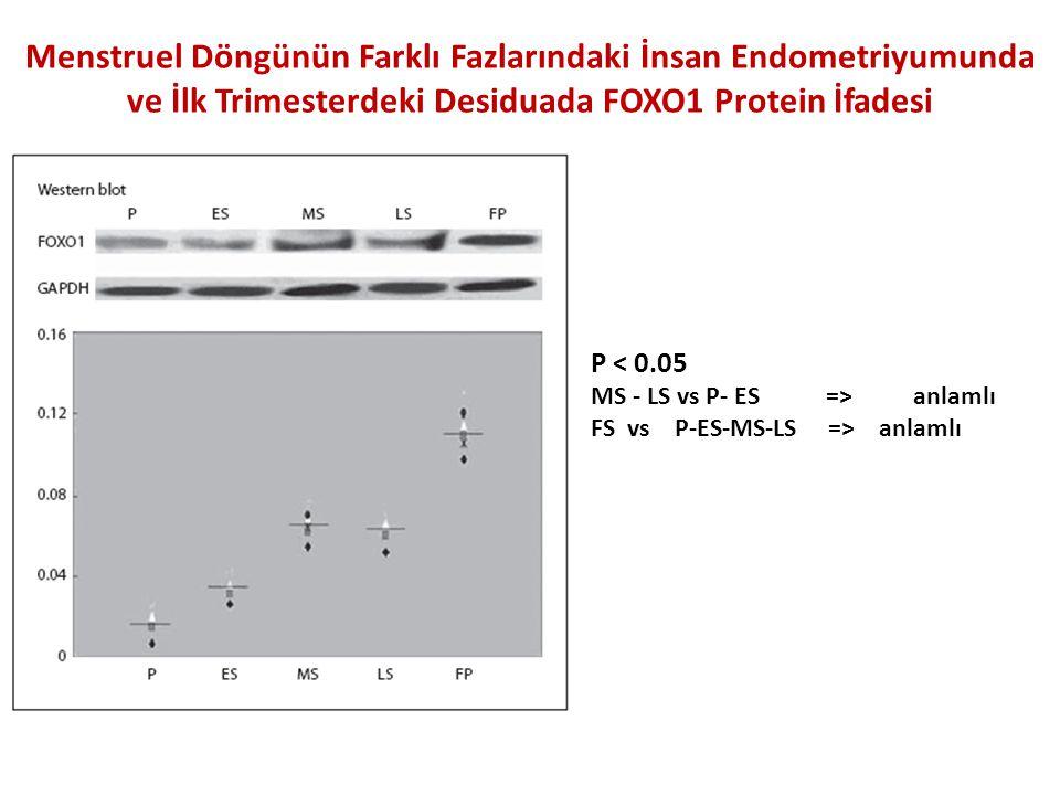 Menstruel Döngünün Farklı Fazlarındaki İnsan Endometriyumunda ve İlk Trimesterdeki Desiduada FOXO1 Protein İfadesi
