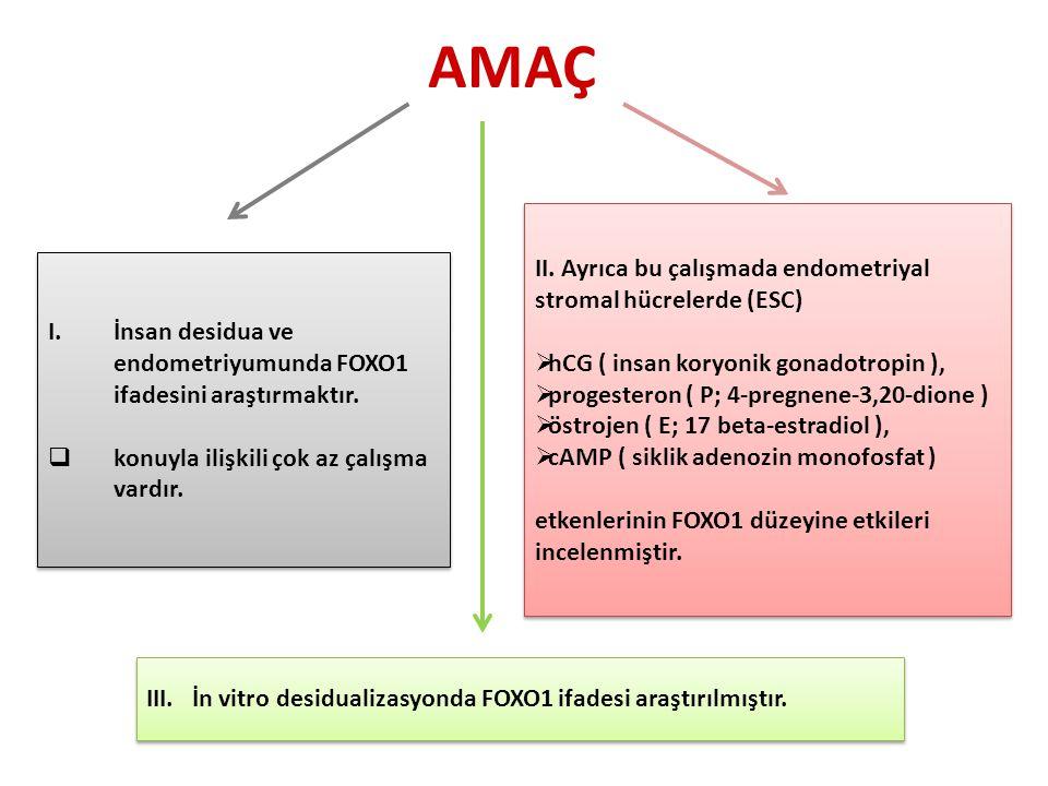 AMAÇ II. Ayrıca bu çalışmada endometriyal stromal hücrelerde (ESC)