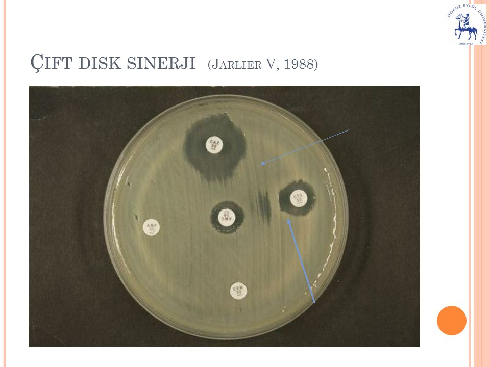 Çift disk sinerji (Jarlier V, 1988)