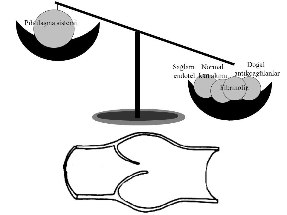 Pıhtılaşma sistemi Doğal antikoagülanlar Sağlam endotel Normal
