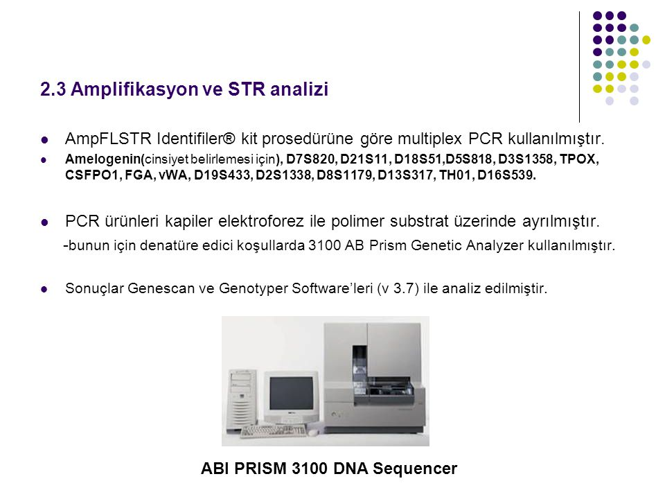 2.3 Amplifikasyon ve STR analizi