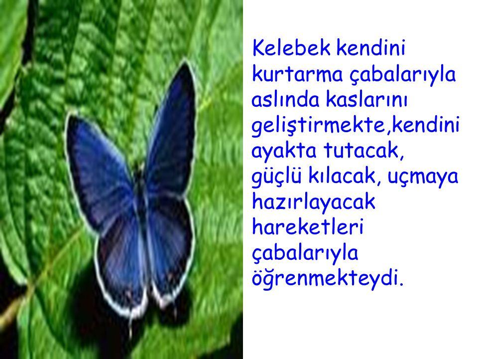 Kelebek kendini kurtarma çabalarıyla aslında kaslarını geliştirmekte,kendini ayakta tutacak, güçlü kılacak, uçmaya hazırlayacak hareketleri çabalarıyla öğrenmekteydi.