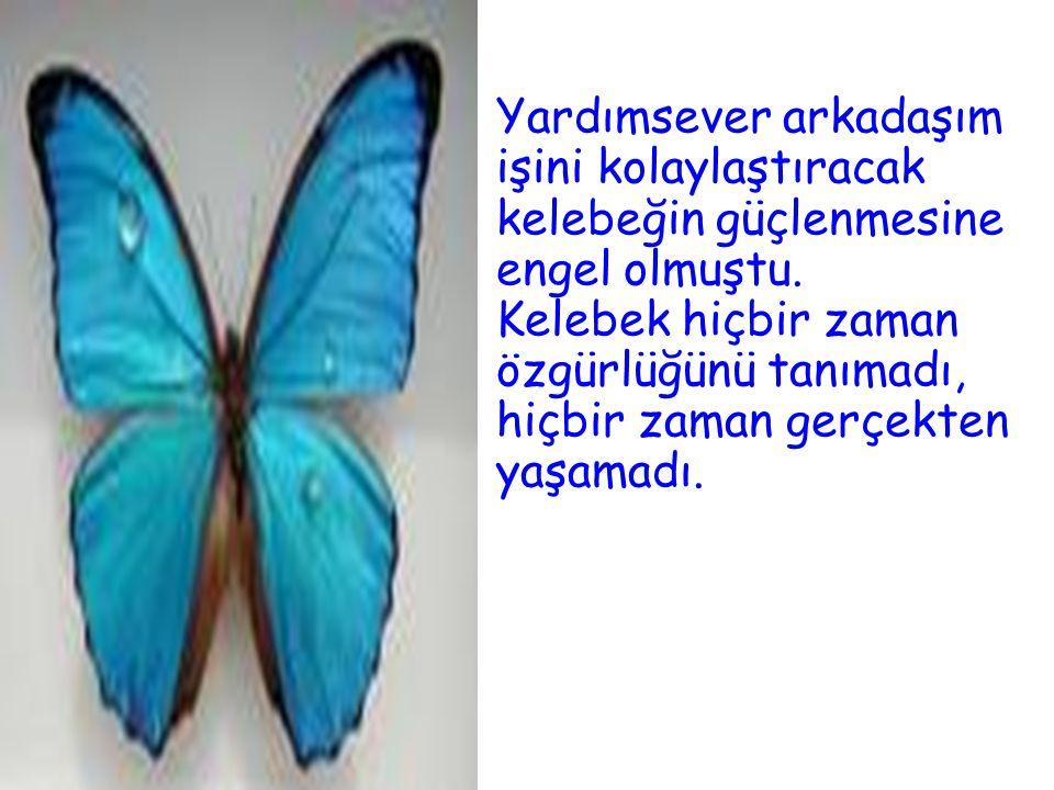 Yardımsever arkadaşım işini kolaylaştıracak kelebeğin güçlenmesine engel olmuştu.