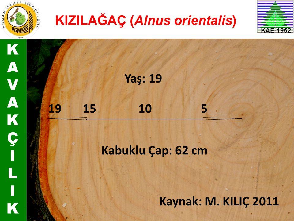 K A V Ç I L KIZILAĞAÇ (Alnus orientalis) Yaş: 19 19 15 10 5