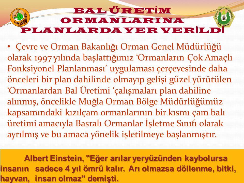 BAL ÜRETİM ORMANLARINA PLANLARDA YER VERİLDİ