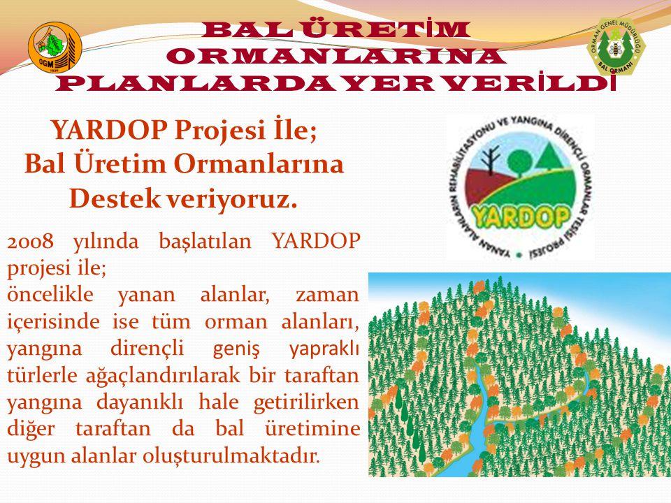 BAL ÜRETİM ORMANLARINA PLANLARDA YER VERİLDİ Bal Üretim Ormanlarına