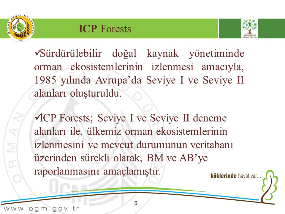 ICP Forests